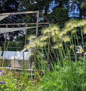 Die Garten-Therapie